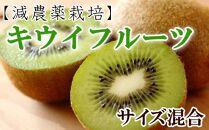 【減農薬栽培】和歌山産キウィフルーツ約3kg(サイズ混合)