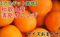【アルギット栽培】和歌山産清見オレンジ約5kg(M~3Lサイズおまかせ)