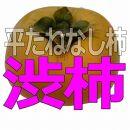 <2021年発送>あんぽ柿用生渋柿(平たねなし柿)約15kg54~72個