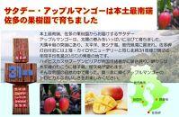 【期間限定】完熟アップルマンゴー1kg以上