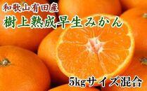 紀州有田産早生みかんの樹上熟成みかん5kg(サイズ混合)