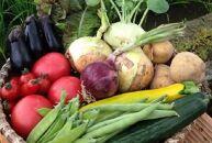 農家直送!!農薬ゼロの旬のお野菜セット