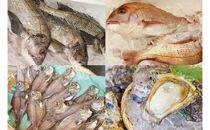 日本海・能生漁港直送!旬の鮮魚詰合せ