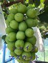 家庭用 旬の葡萄2個セット シャインマスカットと瀬戸ジャイアンツ1.2kg以上