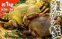 蟹蔵のマングローブ蟹