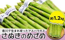 香川で生まれ育ったアスパラガス「さぬきのめざめ」