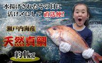 【ギフト用】[下処理なし]≪瀬戸内海産≫朝1番水揚げされた天然真鯛を直送致します。[中サイズ]
