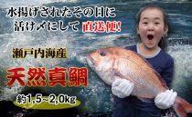 【ギフト用】[下処理あり]≪瀬戸内海産≫朝1番水揚げされた天然真鯛を直送致します。[大サイズ]