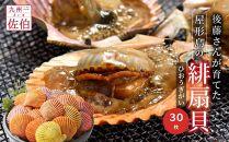 後藤さんが育てた屋形島の緋扇貝(ひおうぎがい)30枚