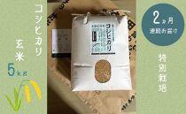 【2か月連続お届け】特別栽培 コシヒカリ 玄米5kg
