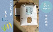 【3か月連続お届け】特別栽培 コシヒカリ 玄米5kg