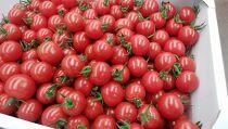 とっても甘い!完熟ミニトマト「キャロルセブン」