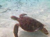 幻のビーチ「百合ケ浜」&LOOKウミガメツアー割引特典