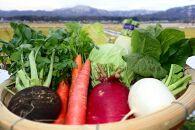 【個性派揃い】丹後自慢の個性派冬野菜セット