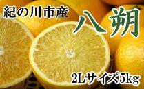 【厳選】和歌山紀の川の八朔約5kg(2Lサイズ・秀品)