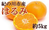 和歌山産はるみ約5kg(M~3Lサイズおまかせ)【希少】