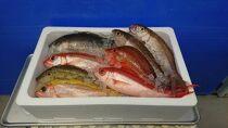 おまかせ鮮魚セット(約7kg)