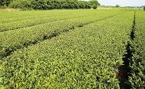 鹿児島茶【緑茶】100g×2袋