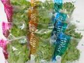 富山のおいしい水と電気エネルギーで生産した安心・安全野菜
