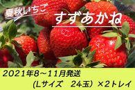 夏秋いちご すずあかね(L24玉)×2トレイ<2021年8~11月発送>