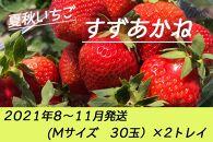 夏秋いちご すずあかね(M30玉)×2トレイ<2021年8~11月発送>
