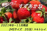 夏秋いちご すずあかね(MS35玉)×4トレイ<2021年8~11月発送>