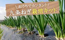 〈こと京都〉自宅で「つくれる」「食べられる」九条ねぎ栽培キット