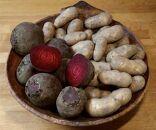 中村農場の美味しいビーツとメークイン 各3kg