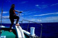 【アオリイカ・青魚などチャーター】第八大洋丸1日チャーター券(大人6名迄)