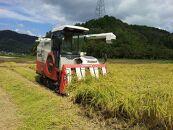 西の魚沼!丹波篠山産 コシヒカリ【出荷直前に精米】30㎏(玄米状態で30kg)