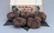 丹波山の芋 優品約1.5㎏