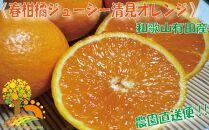 果汁たっぷり!清見オレンジ約10kg有機質肥料100%