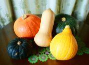 【京野菜】カラフル南瓜セット【5種7キロ】