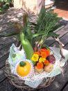 【数量限定50】自然栽培野菜ギフトセット(ほほえみ)