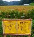 京丹後米~水と文化が育んだ~野間のこしひかり