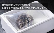 活きたまま届きます!天然黒アワビ海水に酸素入りの特殊梱包1000g入りおすすめセット