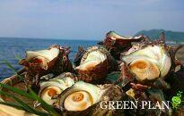 日本海天然・活さざえ1kg