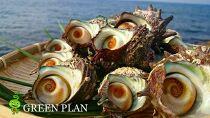 日本海天然・活さざえ2kg