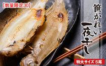 【数量限定30】笹かれい一夜干し(ササカレイ、ヤナギムシカレイ)特大サイズ5尾セット