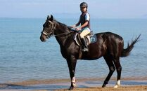 乗馬体験1回コース(30分)