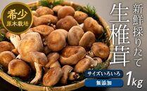 希少・原木栽培!屋久島産・新鮮採りたて生椎茸
