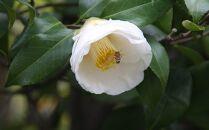 ☆椿農園で採れた椿はちみつ【200g×2本】