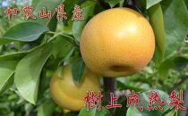 【秋の美味】和歌山の樹上成熟梨 約4kg