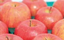 [2021年9月上旬~発送予定]農園主厳選「つがる」 信濃大町・峯村農園のりんご