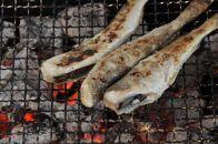 網走炉端で人気の氷下魚一夜干しセット(網走加工)