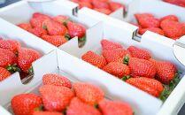 ★早期受付開始★苺好きな農家が作った、甘くて濃厚なさちのか
