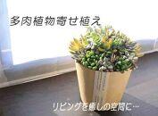 ★品切れ★多肉植物寄せ植え 1鉢
