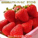 紀州和歌山ブランドいちご「まりひめ」約250g×4P