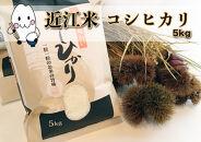 ◆農家直送滋賀県高島市産近江米コシヒカリ5kg×1袋精米済