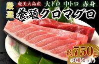奄美大島産養殖クロマグロ(3柵セット)